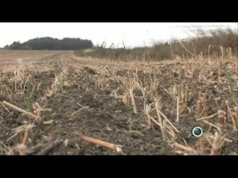 """Die Nutzpflanze Hanf - ein wahrer """"Schatz"""" (Film aus Frankreich)"""