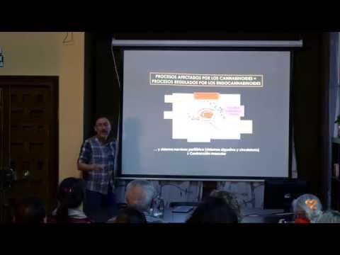 Potencial de los Cannabinoides como Agentes Antitumorales, por Guillermo Velasco