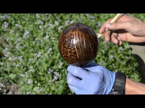 IrieChalice - How It's Made