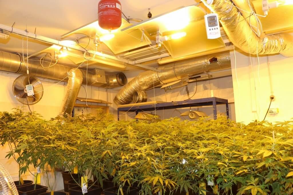 Kleine Anlagen mit dem Cannabisboom bald Vergangenheit?