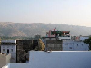 Pushkar 2