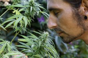 Ist Cannabis für jedermann gleich wirksam?