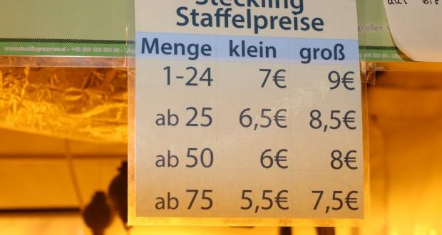 Stecklinge kaufen ist legal in Österreich