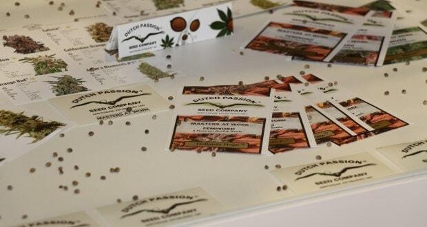 Cannabis Samen mit guter Keimkraft