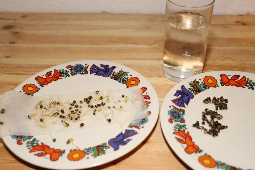 Die zwei Teller zum Hanf quellen lassen und das Wasserglas.