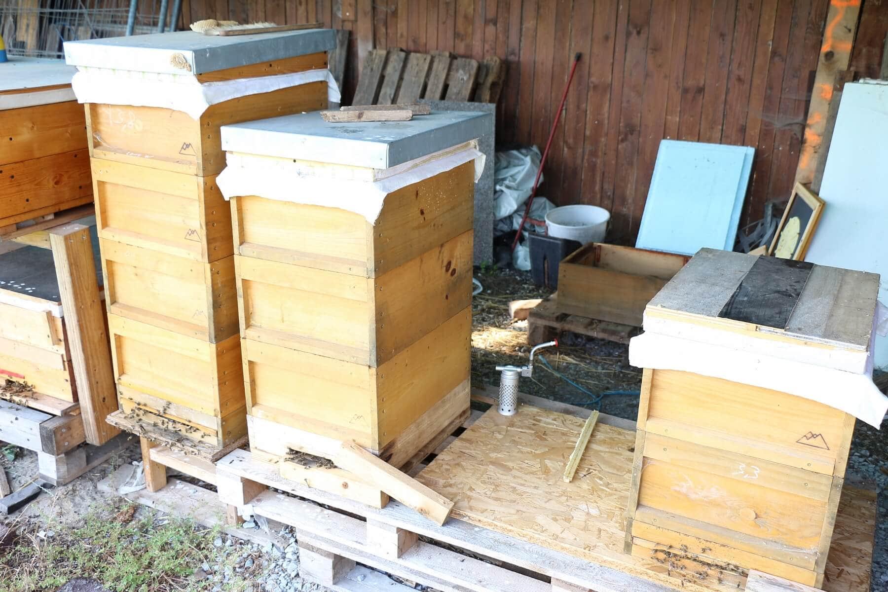 Honigbienen auf dem Münsterland Hanf Hof