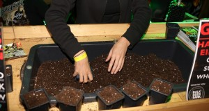 Welche Erde braucht Hanf als Saaterde?