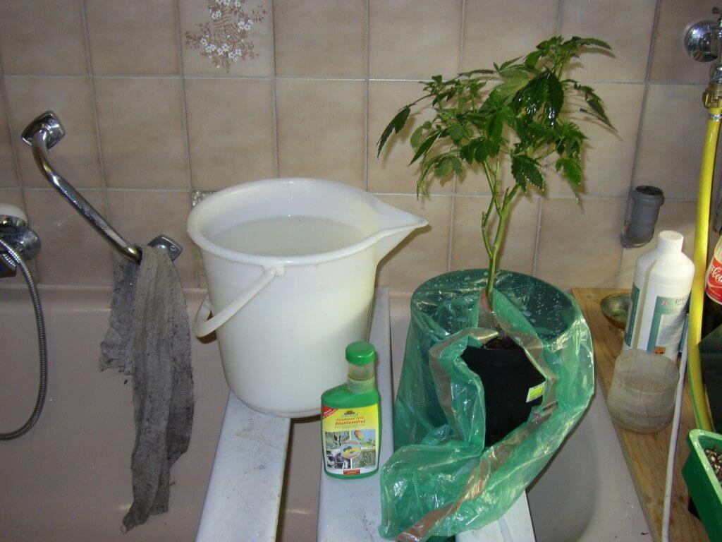 Indoor Grow Schädlinge sind hartnäckig