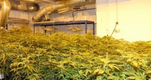 Bringt CO2 Indoorgrowing immer mehr Ertrag?