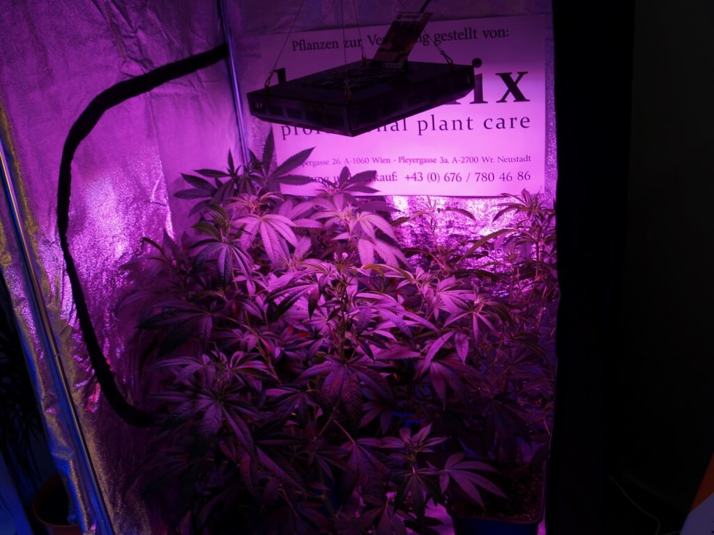 Indoor Growing mit LEDs