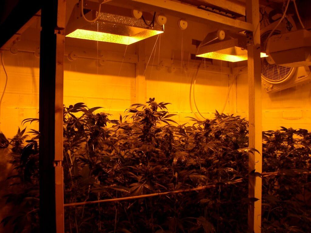 Indoor Growing mit NDLs