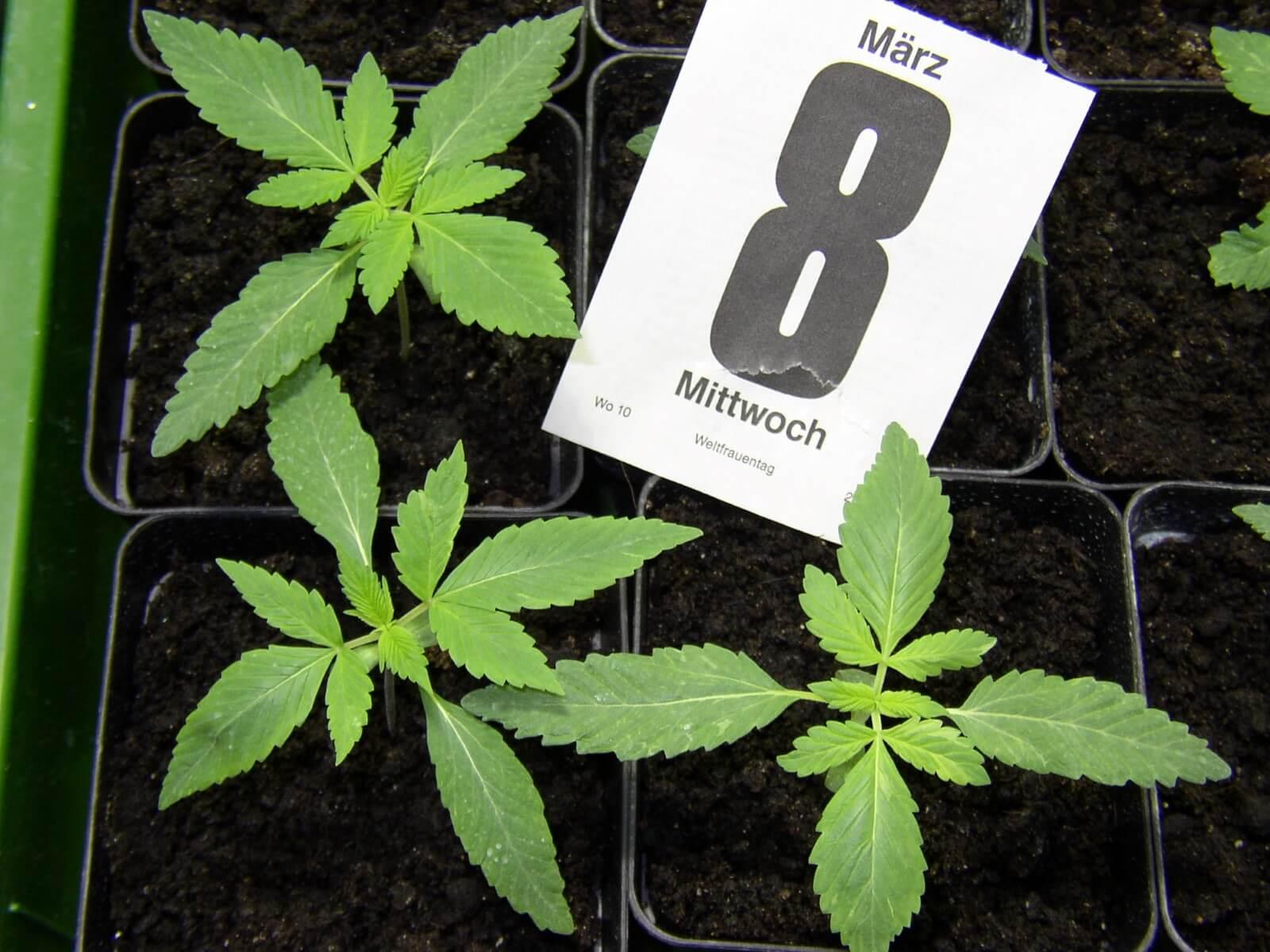 11 pflanzen nahrungsergänzungsmittel