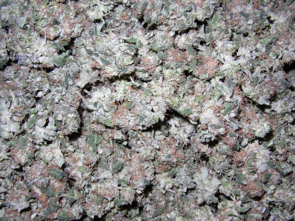 Cannabisblüten als Heilmittel