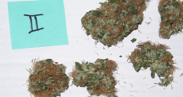 Potenter oder hochpotenter THC Strain?
