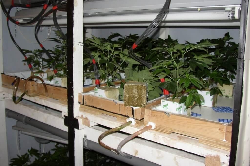 Jungpflanzen auf Steinwolle vorziehen in angepasster Wanne