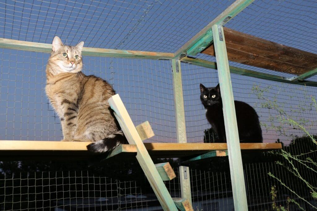 Diese Katzen würden auf Miaurihuana nicht reagieren