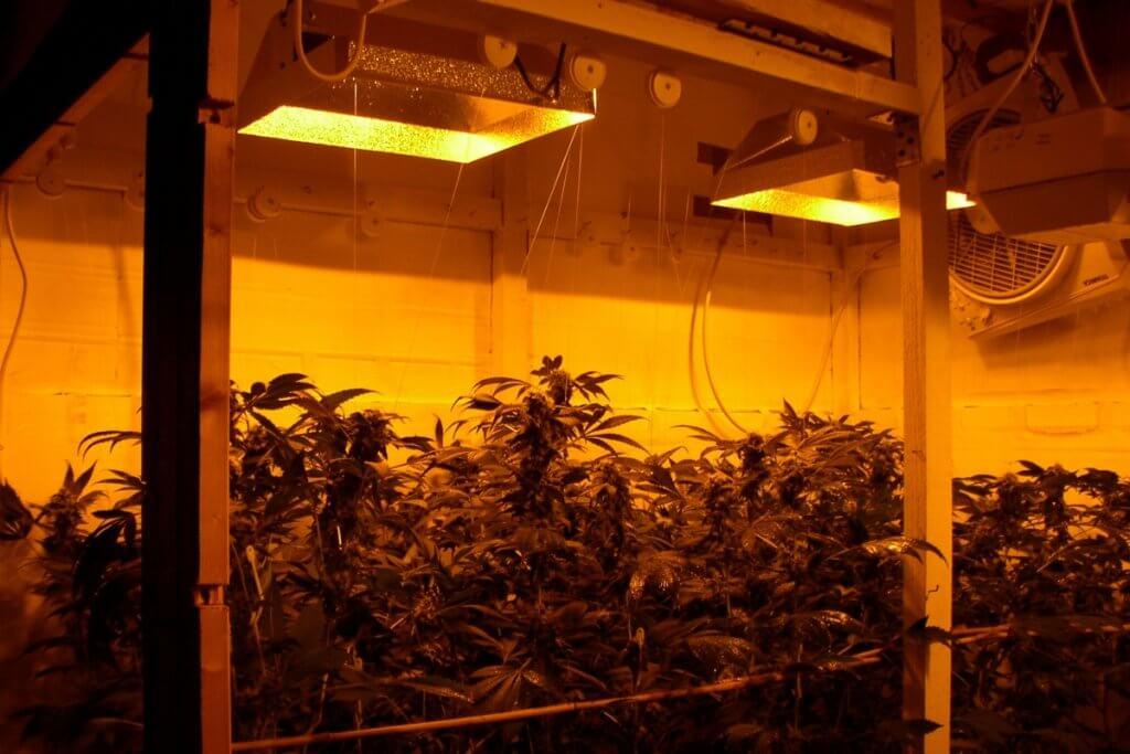 Alter Hammerschlag Reflektor muss mehr Abstand zu den Pflanzen haben
