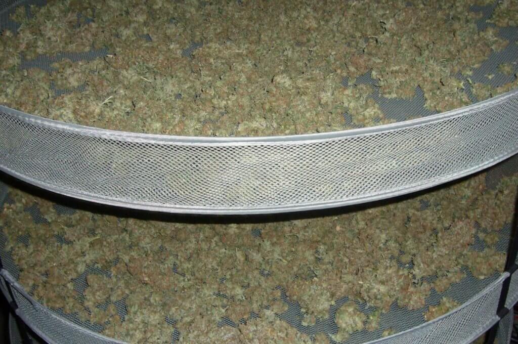 Erfolgreich die Marihuana Ernte einbringen