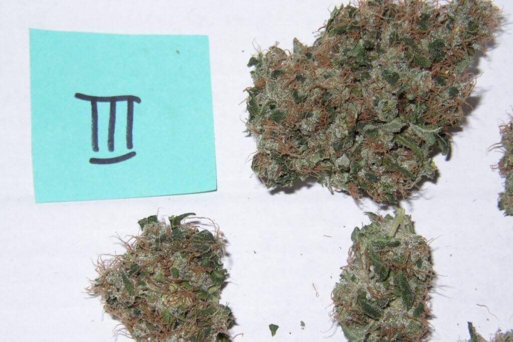 Marihuana Fermentieren muss bei diesen Blüten nicht wirklich sein