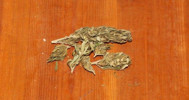 Diese Nutzhanfblüten lagen einfach im Duftsack und sind wegen dem Alter sogar schon blass geworden