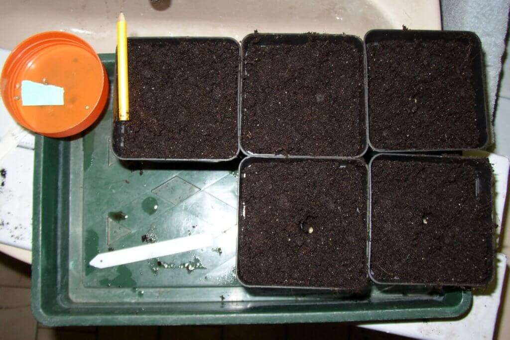 Wer eine Mutterpflanze selektieren möchte, sollte etwas mehr Auswahl haben