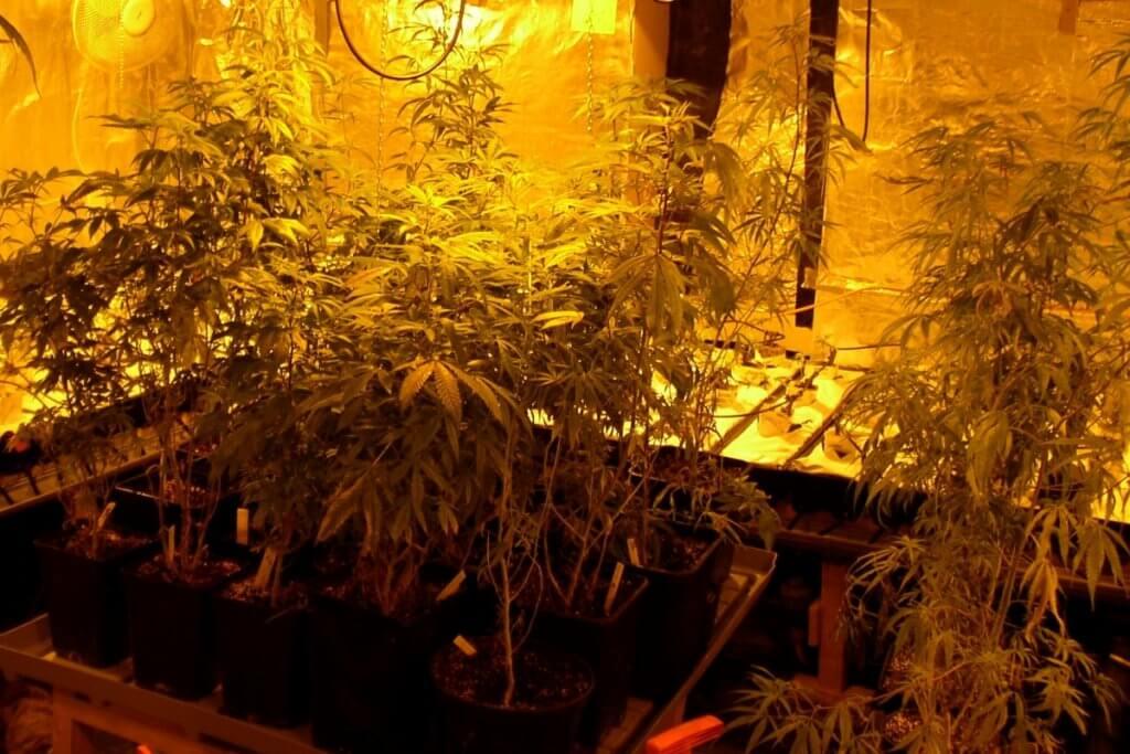 Mutterpflanzen anbauen bedeutet vorplanen