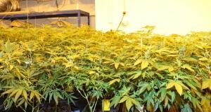 Wer so viele Pflanzen hat, solle die Zuluft gut planen