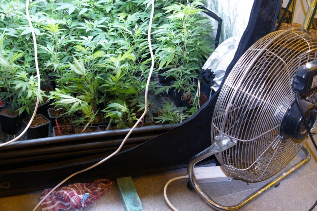Pflanzen anwehen oder nicht?