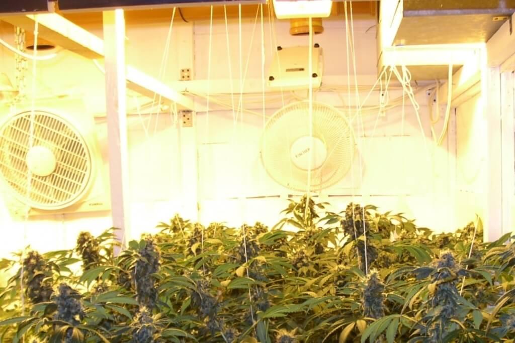 Growkammer Luftverwirbelung senkrecht und waagerecht