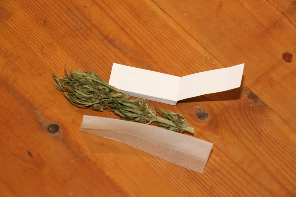 Kommt die Cannabis Legalisierung?
