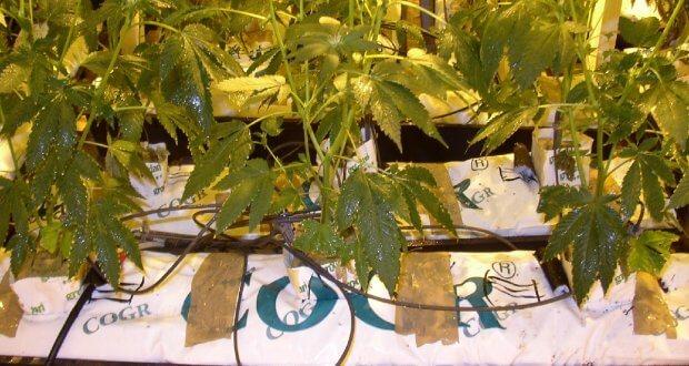 Modifizierte Gardena Urlaubsbewässerung
