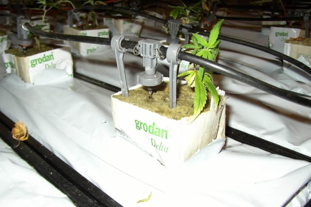 Gardena Microdrip eignet sich für Profigrowanlagen