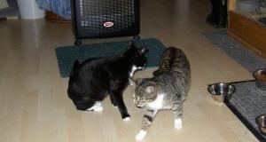 Katzen würden vor dem Ofen liegen oder spielen