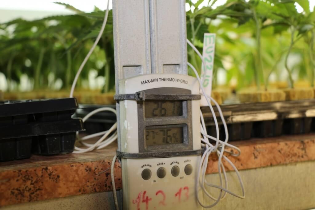 Die richtige Growkammer Luftfeuchtigkeit entscheidet über den besseren Erfolg
