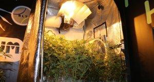 Die Natriumdampflampe ist der Klassiker im Indoor Marihuanaanbau