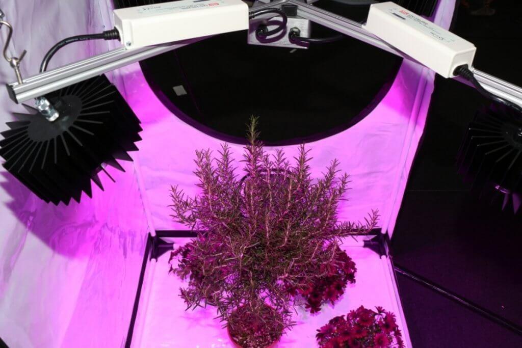 LEDs als neue Growraum Leuchtmittel mit weniger Wärmeabstrahlung