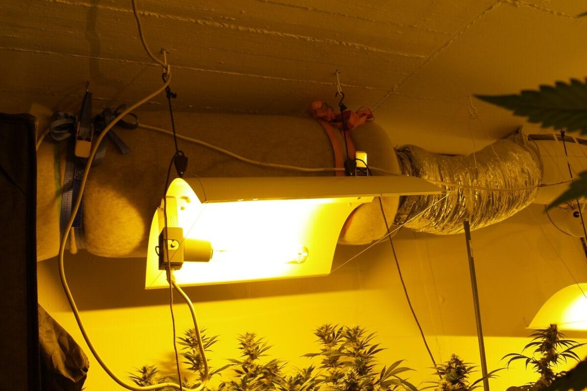 Auffalliger Stromverbrauch Fallt Der Indoor Marihuana Anbau Auf