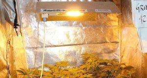 Die effektive Indoor Pflanzenbeleuchtung zieht derzeit immer viel Strom
