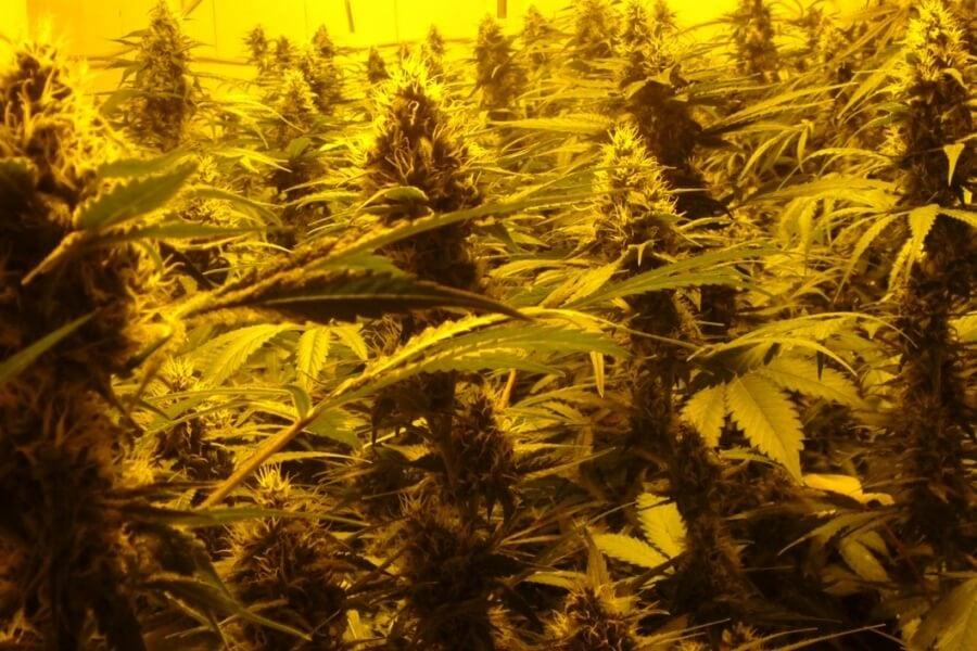 Die Legalisierungswelle überrollt uns schon bald