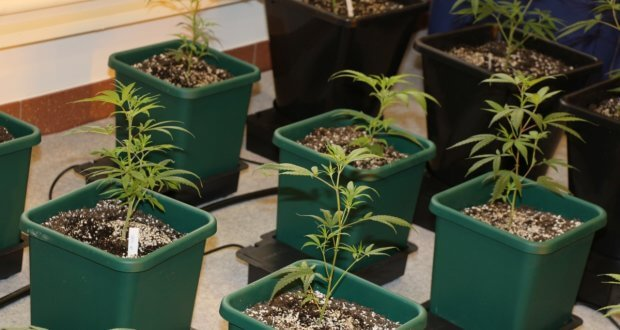 Passive Bewässerung für faule Grower