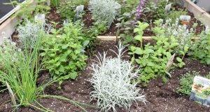 Messepflanzen in Plagron Erde