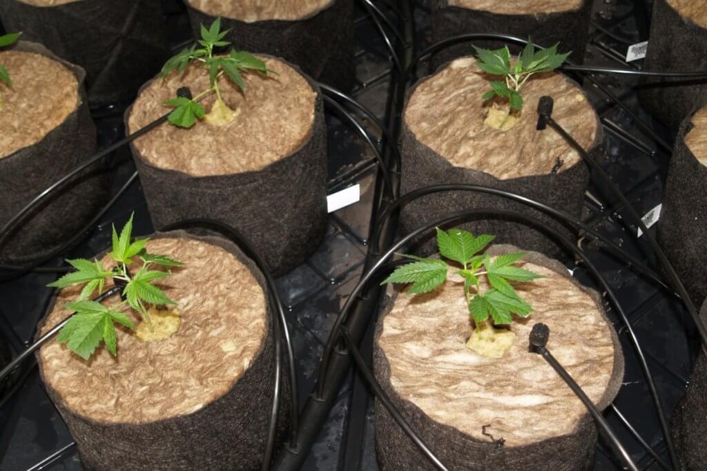 Ein hydroponischer Anbau ohne pH Messgerät wird meistens nicht gelingen