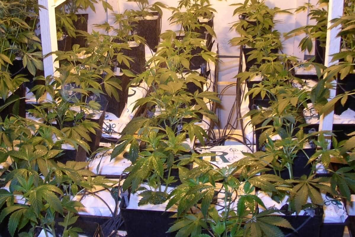 Pflanzen Wurzeln