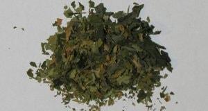 Sind nur getrocknete Pflanzenteile Drogen?