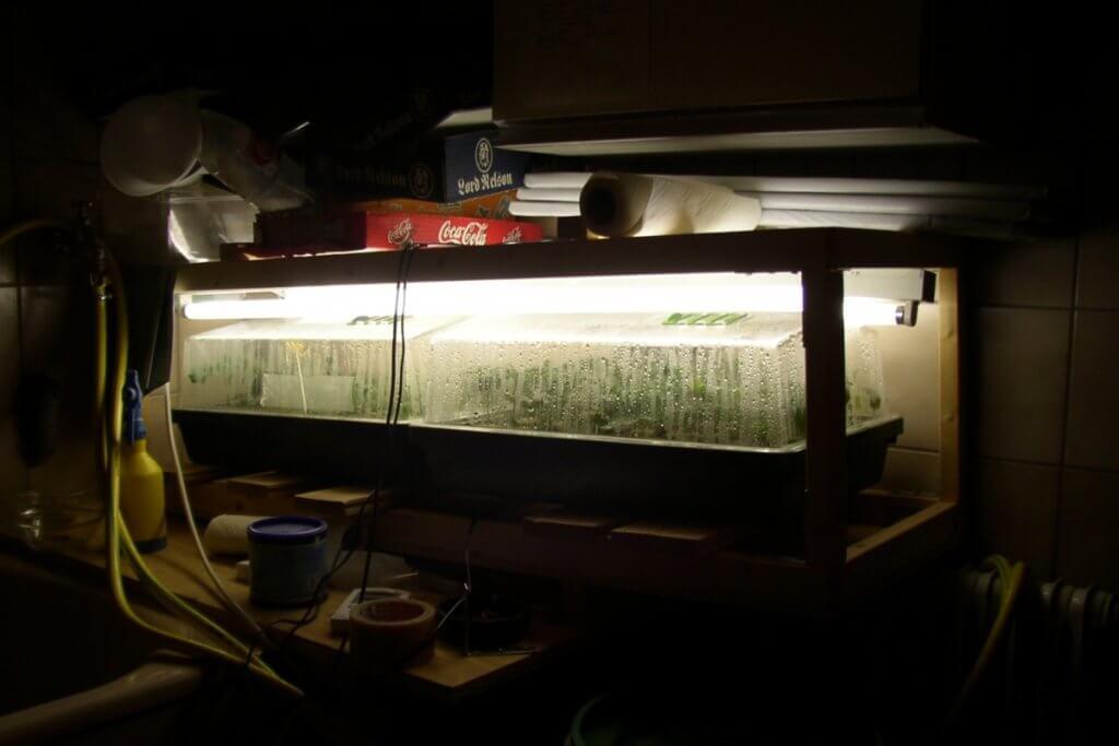 Persoenliche Stecklingserfahrungen auf dem eigenen Badezimmer