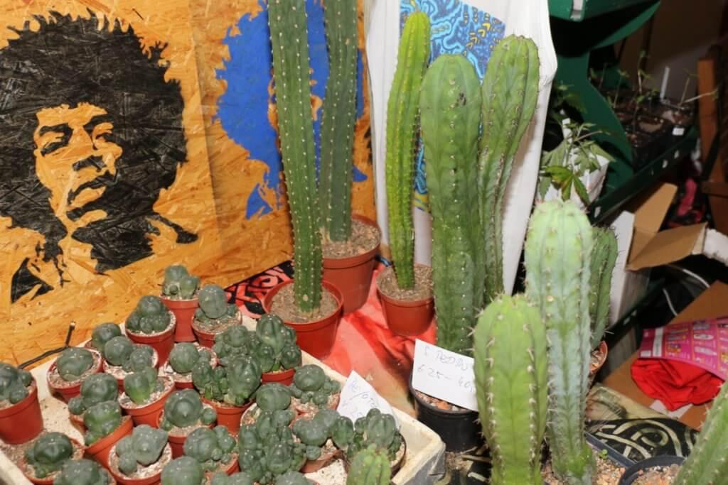 Psychonauten mögen viele Pflanzen