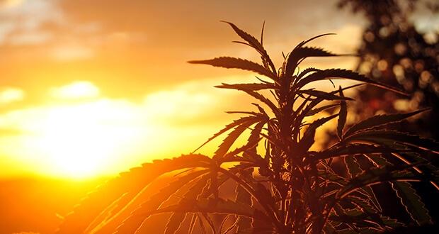 Uruguay startet Marihuana-Verkauf in Apotheken