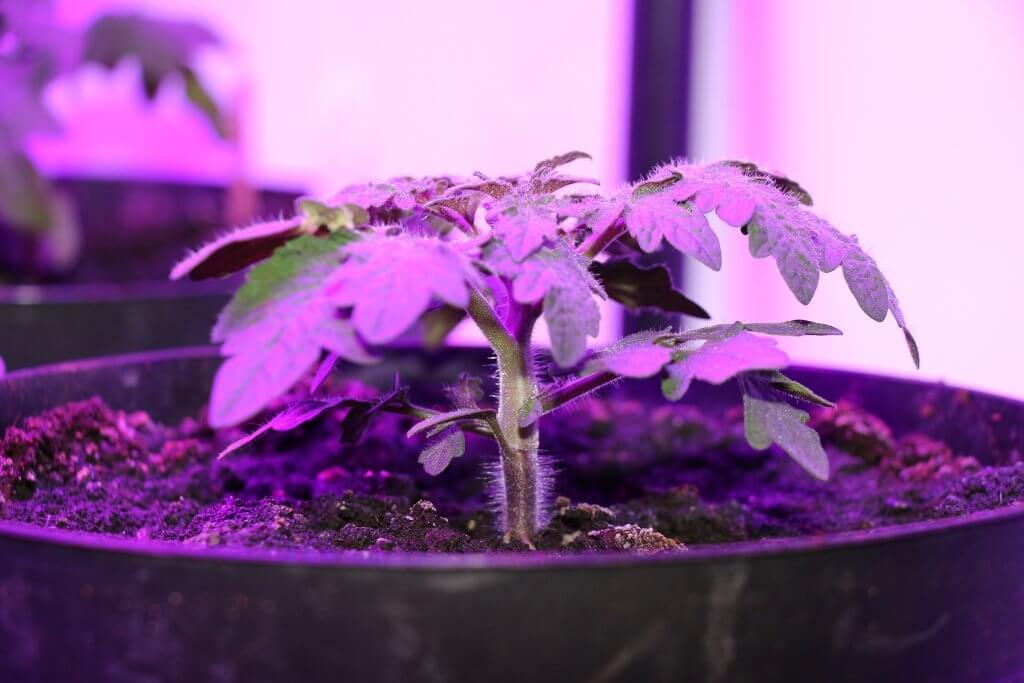 Dicker Pflanzenstamm