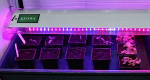 Easdesy Hydro Vario von i-Grows im Produkttest