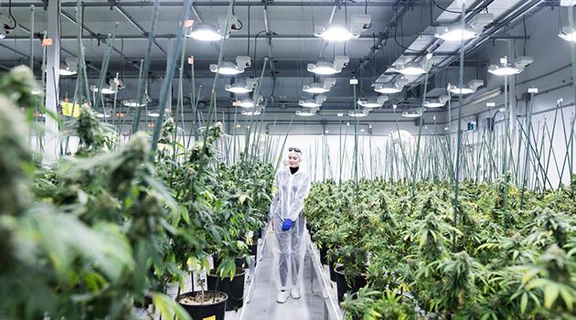 cannamedical bereitet gr ten legalen cannabis import in der geschichte der eu vor hanf. Black Bedroom Furniture Sets. Home Design Ideas